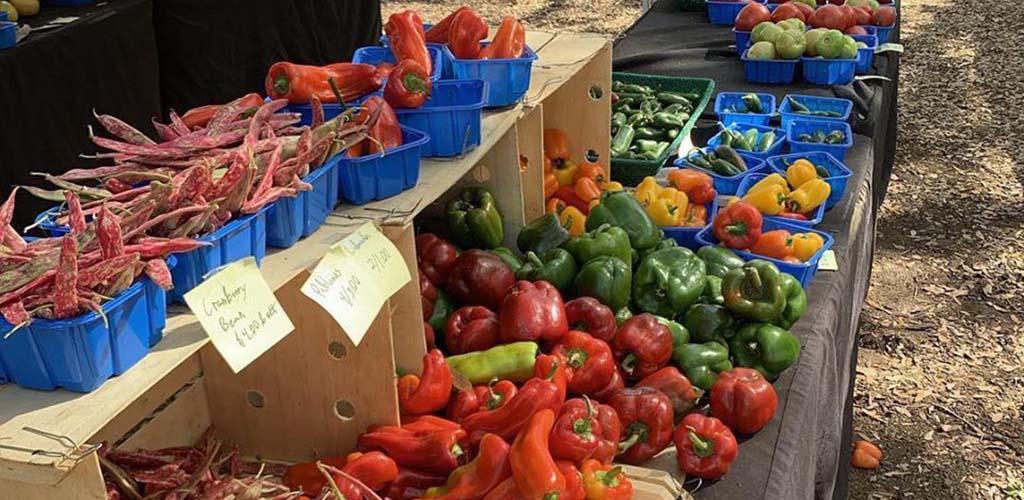 Fresh produce available at Orlando Farmers Market