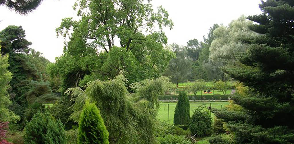 The beautiful greenery at the Fletcher Moss Botanical Garden
