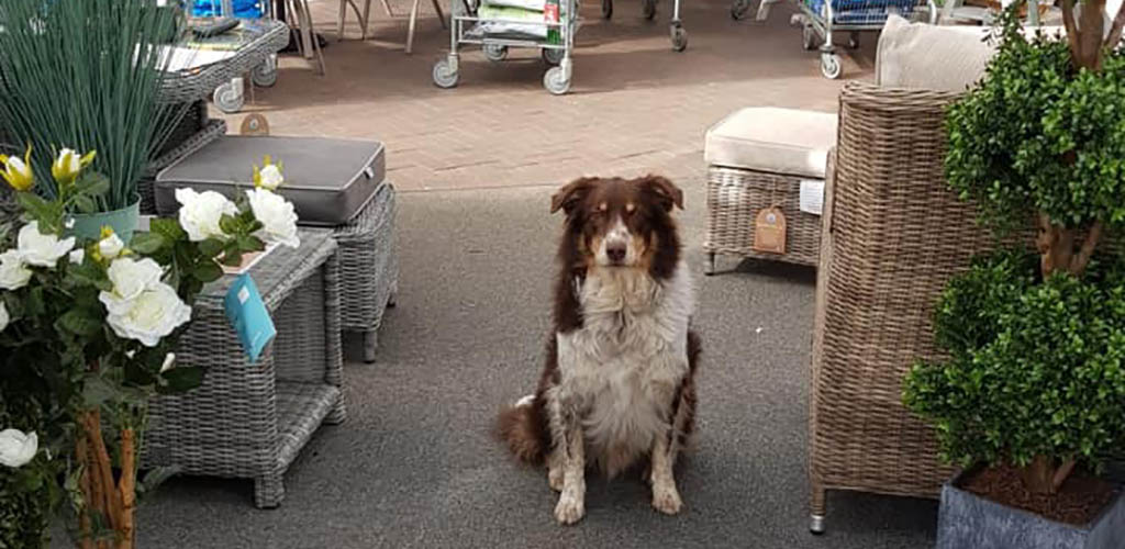 A cute dog in the outdoor plant area of Melbicks Garden Centre