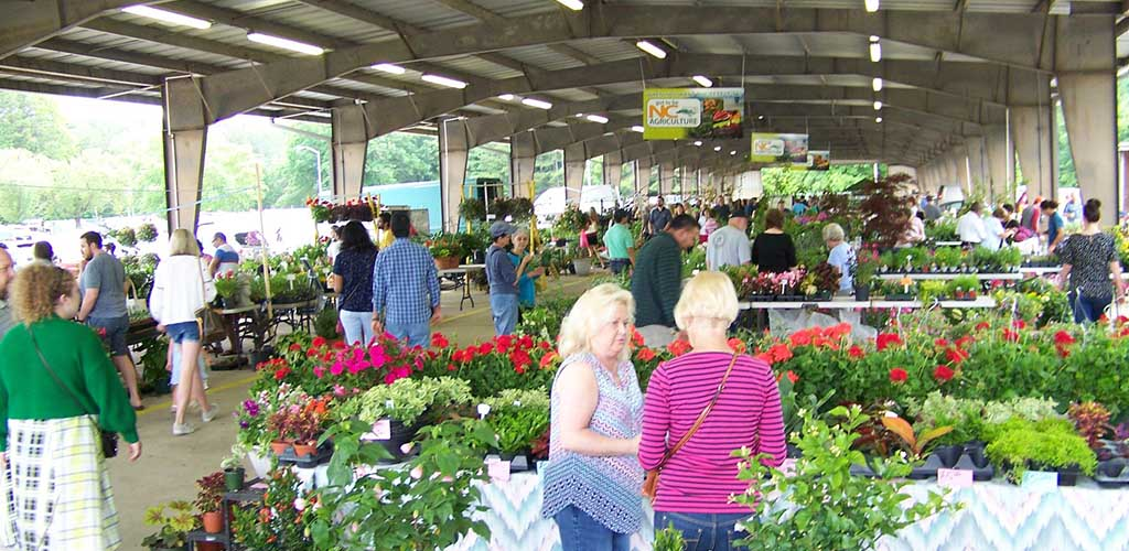 Women shopping for produce at the Charlotte Regional Farmers Market