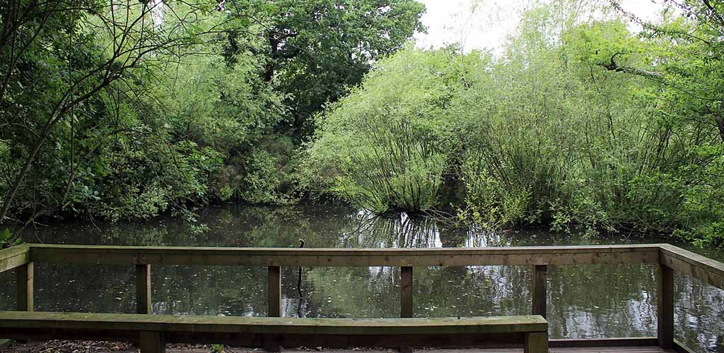 The pristine pond at Wirral Country Park