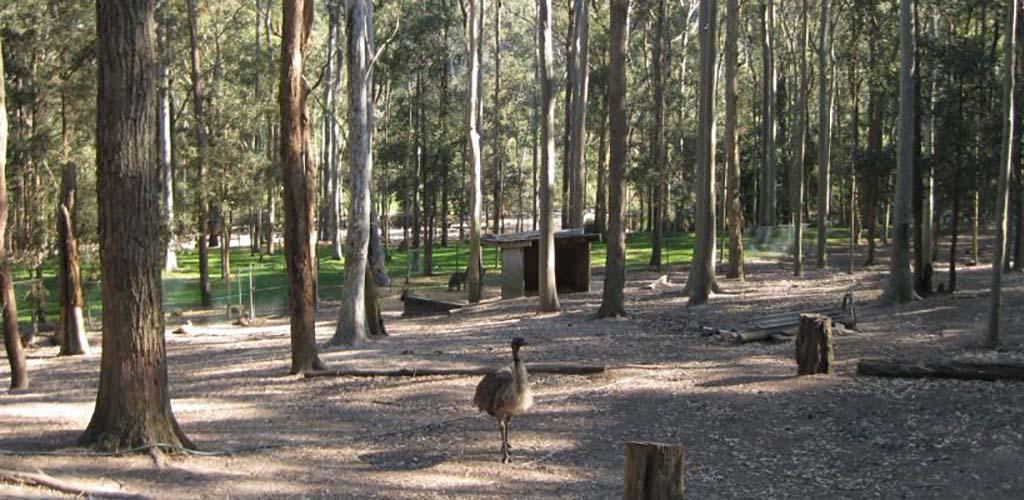 An emu sighting at Blackbutt Reserve