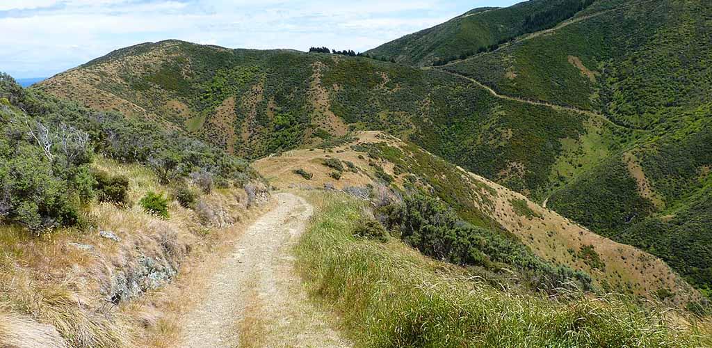 The trail at Te Kopahou Reserve