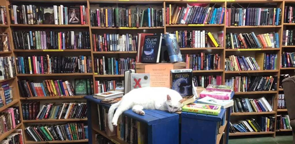 Thousands of books and a cute cat at Book Barn