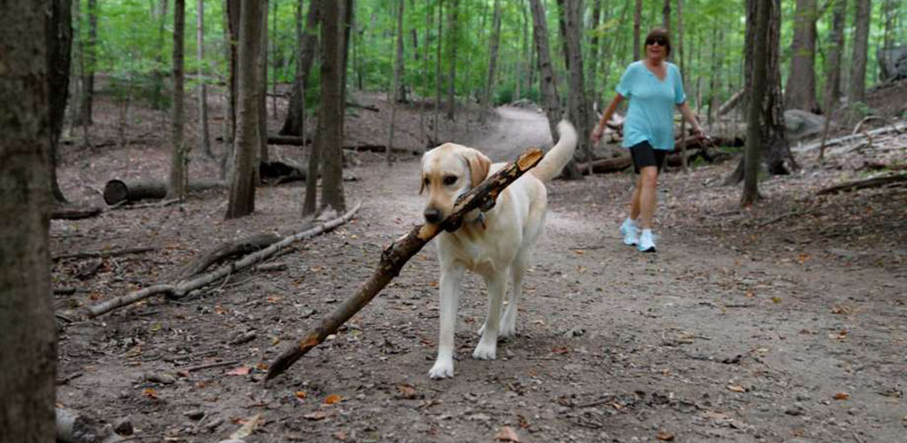 A woman taking her dog for a walk at Mianus River Park