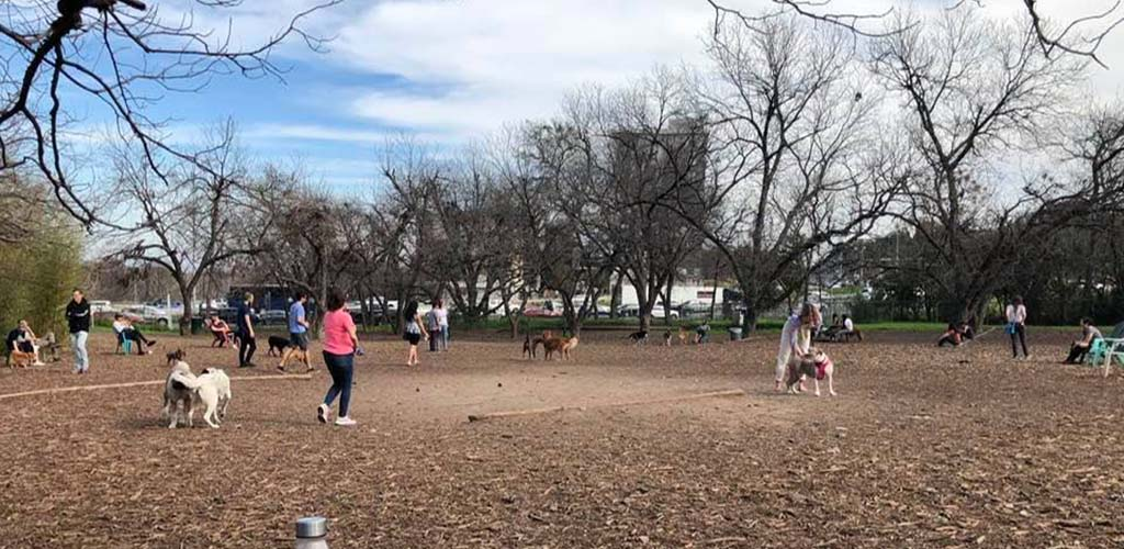 The Norwood Estate Dog Park on an overcast day
