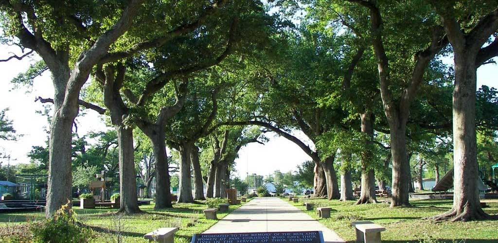 Rows of trees at The War Memorial Park