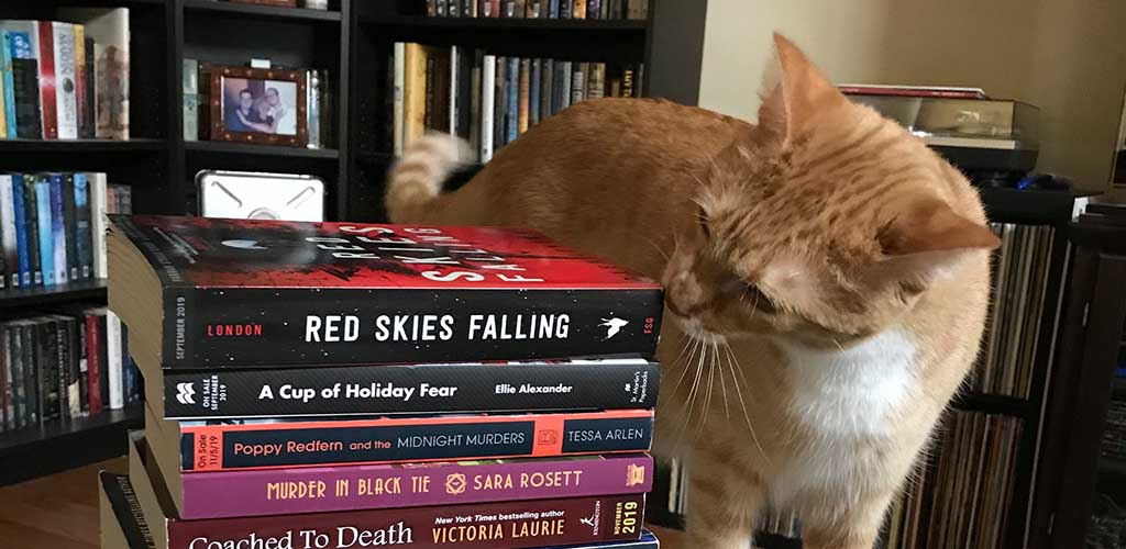 The resident cat checking out the new books at Murder by the Book
