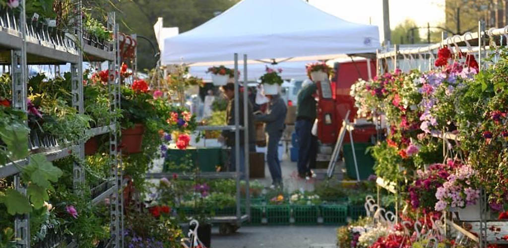 Fresh flowers at the North Union Farmers Market