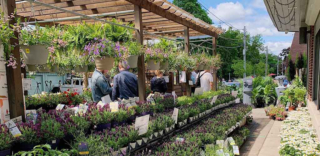 Plants for sale at Summerhill Market