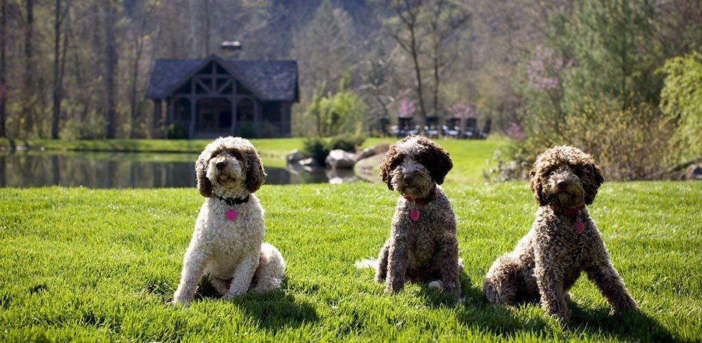 Adorable dogs at Rickman's Run Dog Park