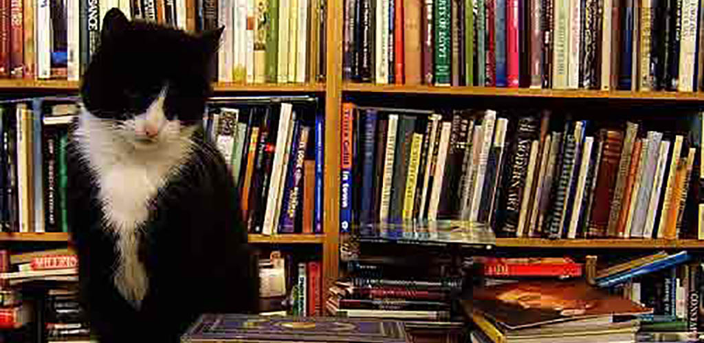 A cat guarding the books at Voltaire and Rousseau Bookshop